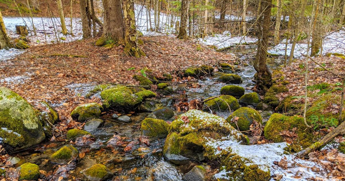 stream in woods in the winter