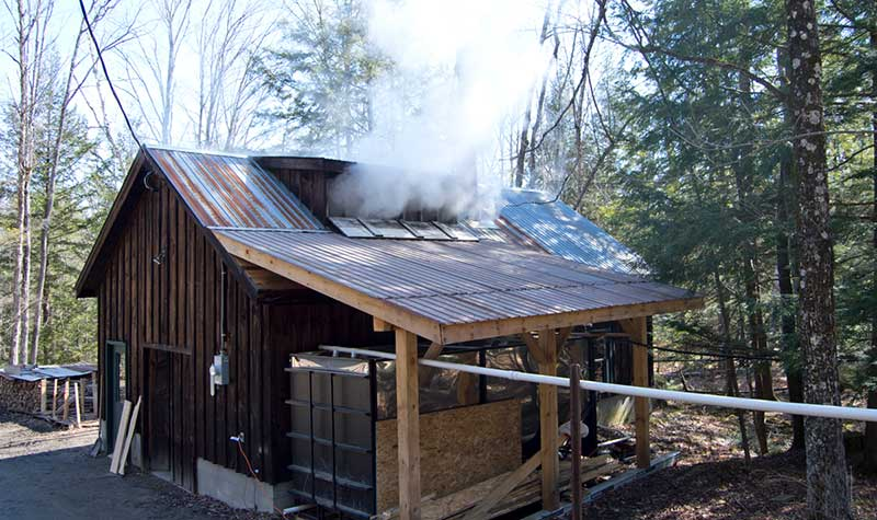 Sugar house with steam rising out from making maple syrup in Thurman NY