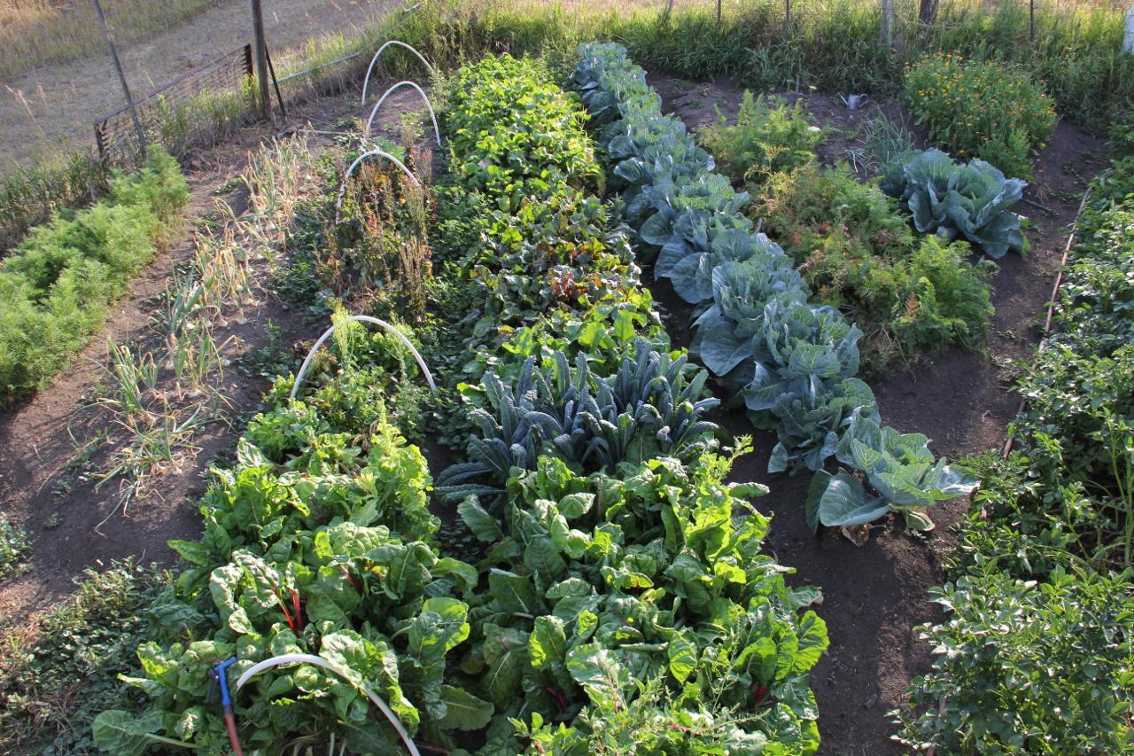 farmstead-farm.jpg