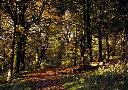 wooded-trail.jpg