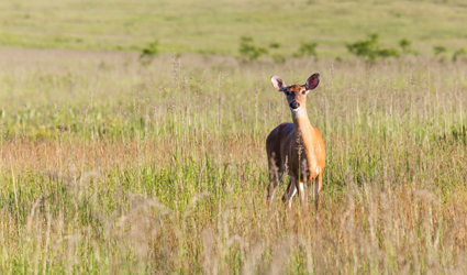 Clarification on the new whitetail deer hunting for Nysdec fishing regulations