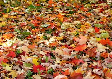 leaves-on-the-ground.jpg