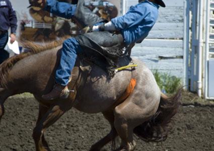 rodeo-horse.jpg