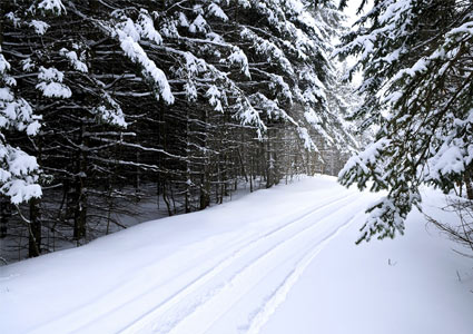 winter-tracks.jpg