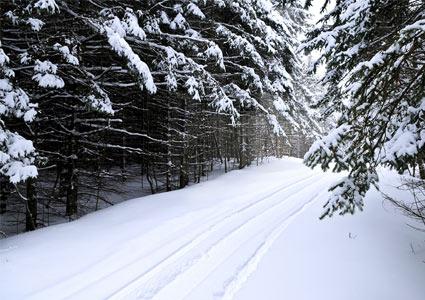 winter-tracks.jpg