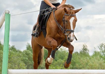 horse-jumping.jpg