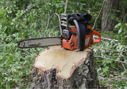 chainsaw-and-logging.jpg