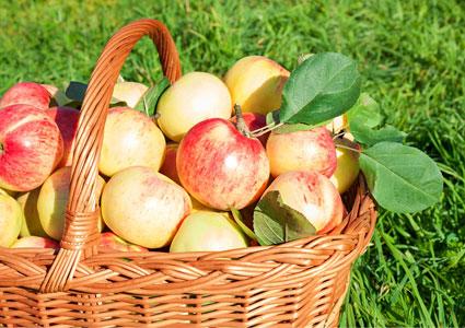 basket-of-apples.jpg