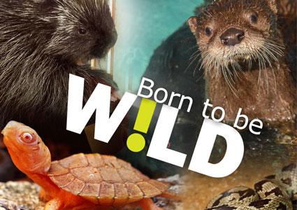 born-to-be-wild.jpg