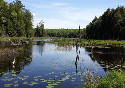 palmer-pond.jpg