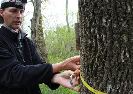 elm-tree-measure.jpg