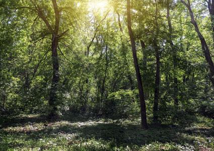 trees-woods-site.jpg