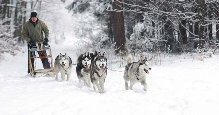 a dog sled ride