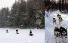 snowmobilers and a dog sled