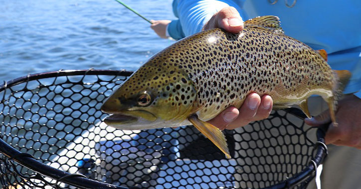 The 2018 trout fishing season has begun in ny state the for Nys fishing seasons