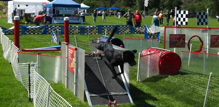 dog running in obstacle course