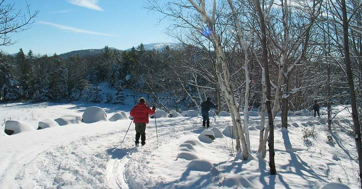 people snowshoeing or cross-country skiing