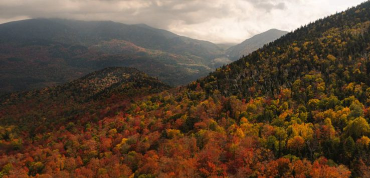 rooster comb in the adirondacks in the fall