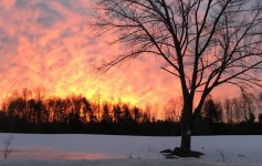 a sunset over a snowy field and tree
