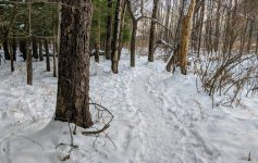 path in the woods in winter