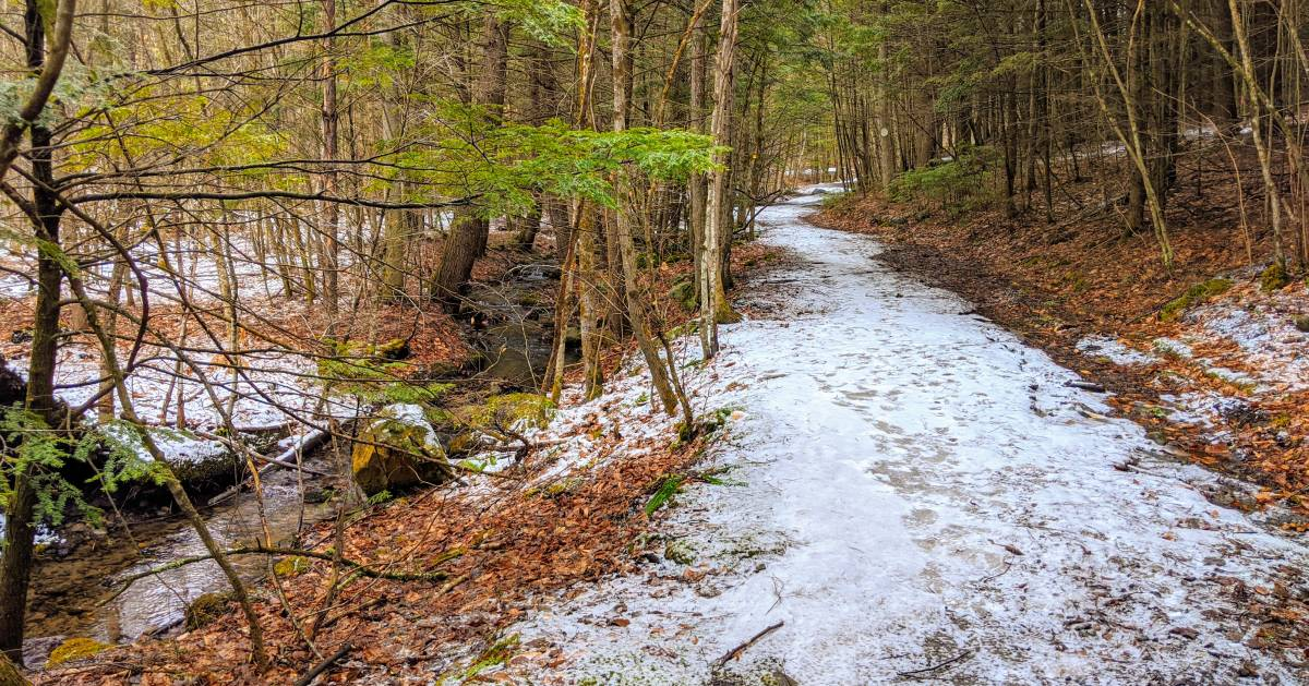 snow on trail in woods