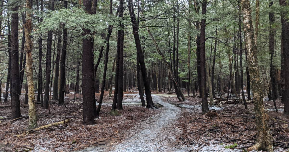 path in woods, trees