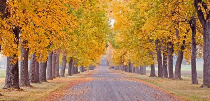 drive with fall foliage