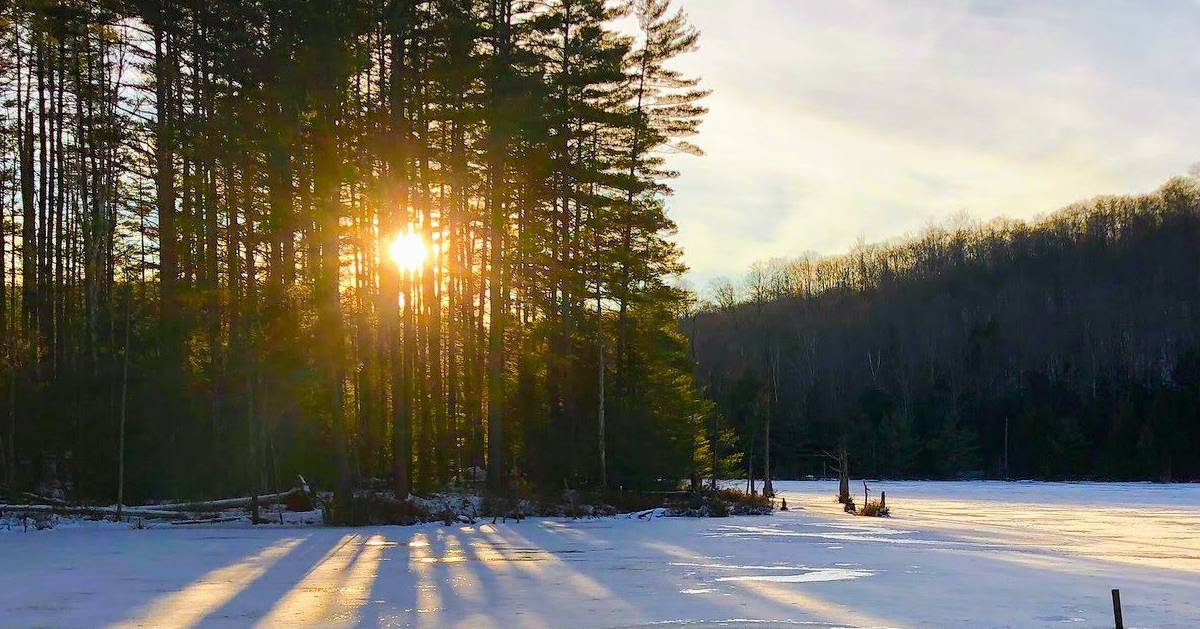 sun rising or setting through woods in winter