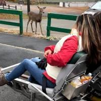 girl railbiking, she sees a deer