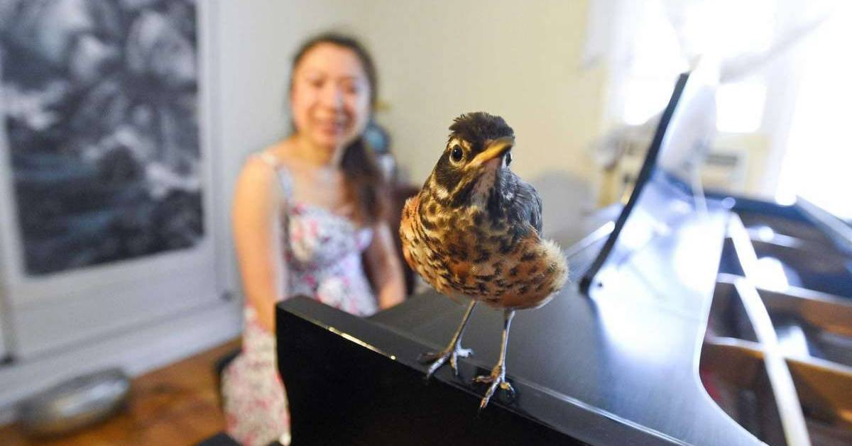 pianist with bird on piano