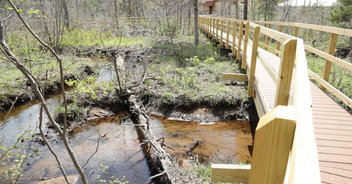 walkway in wetlands