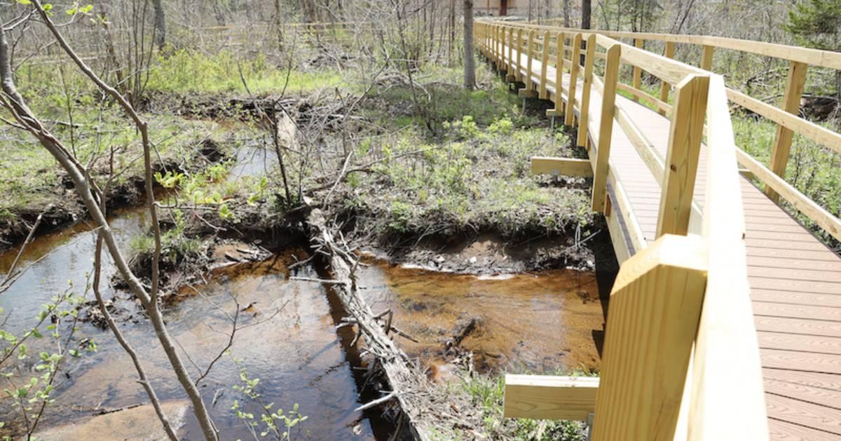 walkway in woods