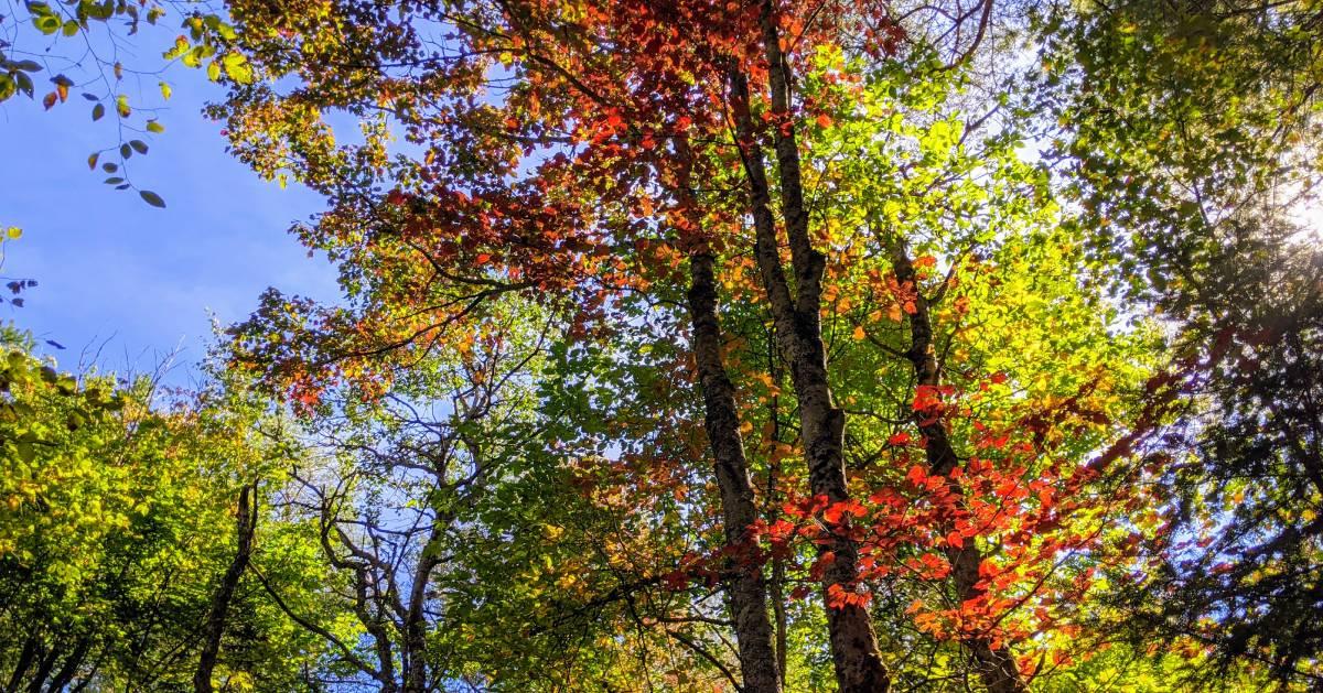 foliage on trees