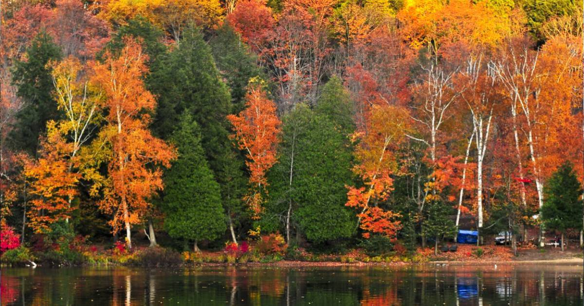 fall colors on trees by a lake
